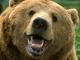 Danish Bears