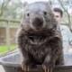 Wombat Gaming